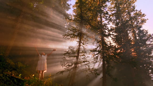 wide shot low angle girl in pine forest looking up + raising arms / god rays shine through trees / aspen, colorado - pine stock videos and b-roll footage