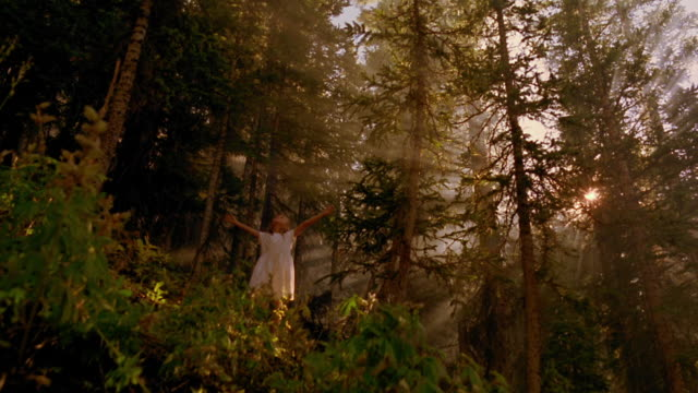 wide shot low angle girl in pine forest looking up + raising arms / sun shining through trees / aspen, colorado - pine stock videos and b-roll footage