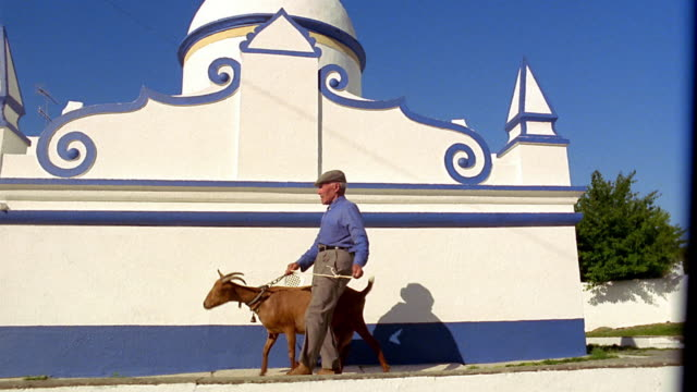 vidéos et rushes de wide shot low angle tracking shot man walking with goat next to blue and white building / monsaraz, portugal - couvre chef
