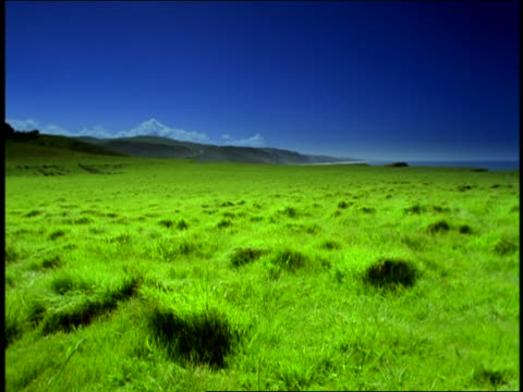 wide shot lush green field near Pacific Ocean, Half Moon Bay, California