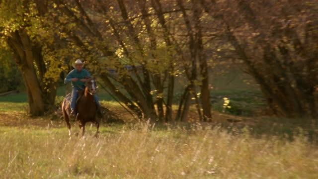 wide shot man in cowboy hat riding horse on field in autumn / border collie running behind / colorado - sheepdog stock videos & royalty-free footage