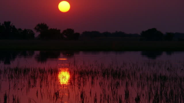 wide shot marshy lake at sunset / botswana, southern africa - southern africa stock videos & royalty-free footage