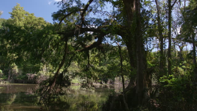 wide shot of a bayou in the area of the mississippi river - sumpf stock-videos und b-roll-filmmaterial