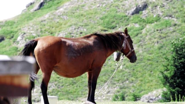 Weiter Schuss eines schönen braunen Pferdeschwühls im Berg, Tiere in der Natur, Wildtiere,