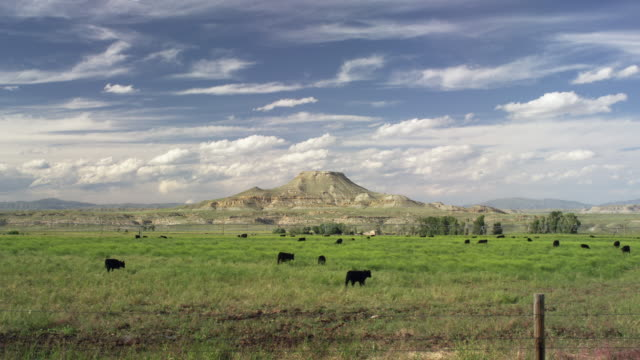 vidéos et rushes de wide shot of a butte in wyomingtime lapse with cattle - piton rocheux