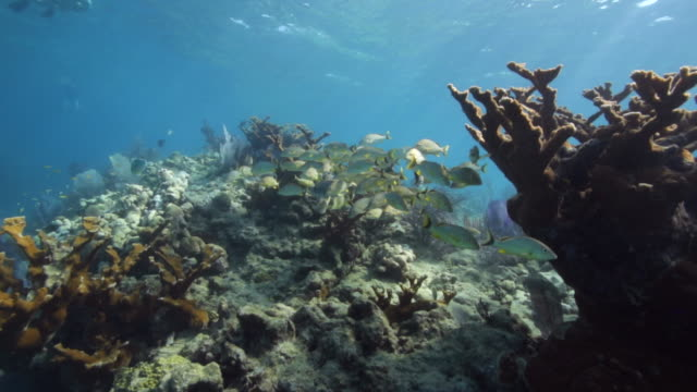 Wide Shot of a Coral Reef in Looe Key Florida