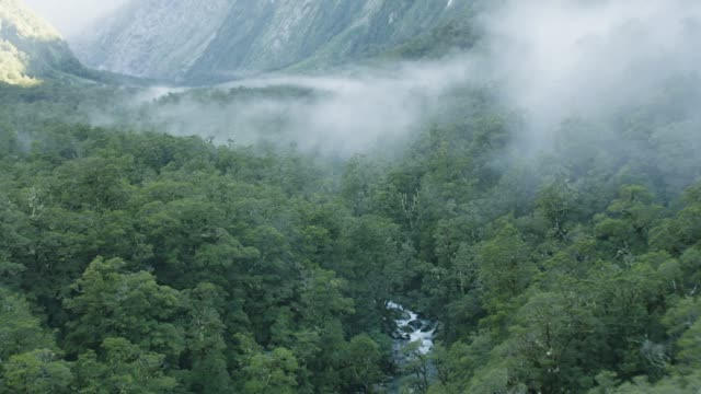 wide shot of a foggy valley in the fiordland national park - rainforest stock videos & royalty-free footage