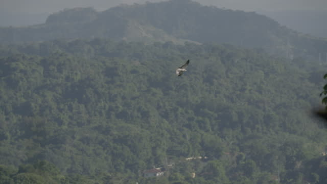 Wide shot of a hawk flying away over a forested landscape
