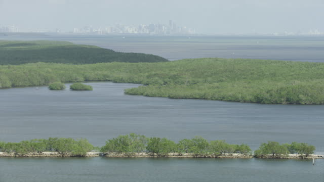 wide shot of a mangrove forest with downtown miami in the background - biscayne bay stock-videos und b-roll-filmmaterial