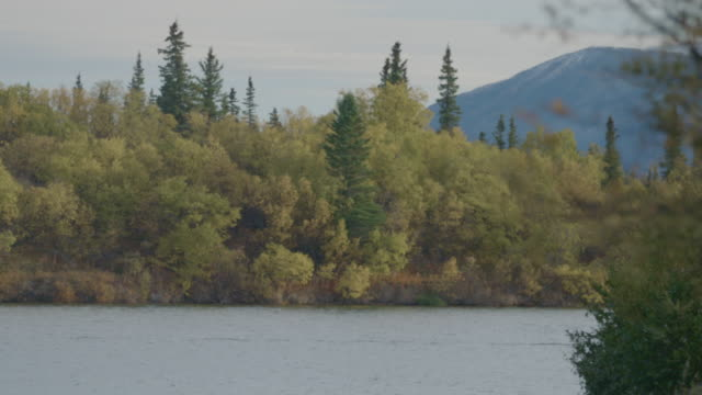 Wide shot of a mixed forest on the shore of Lake Iliamna