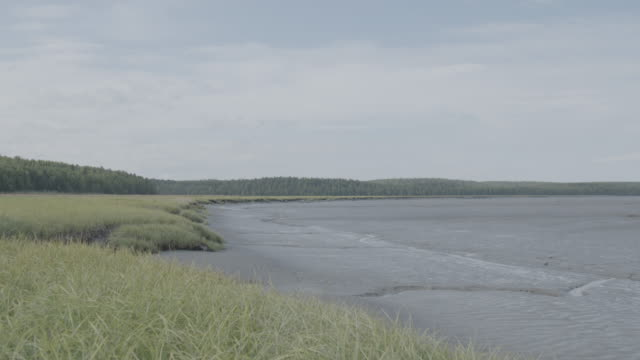 wide shot of a mud flat next to a grass field - mud flat stock videos and b-roll footage