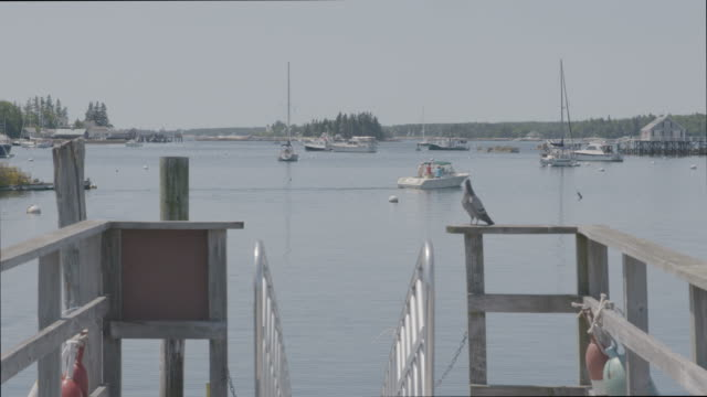 Wide shot of a pigeon at the end of a pier in Boothbay Harbor