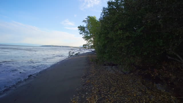 Wide shot of a seashore and a coastal trail in Lynn Ary Park