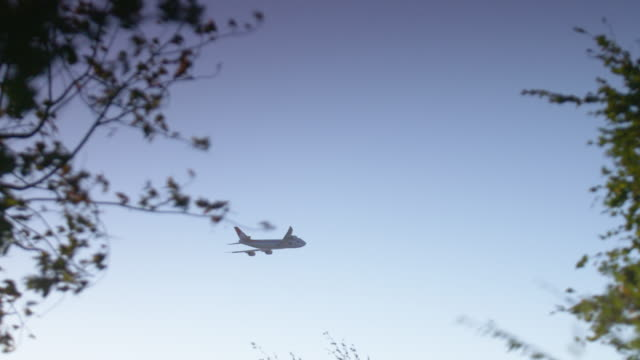 wide shot of an airplane flying in the sky behind tree branches - anchorage alaska stock videos & royalty-free footage