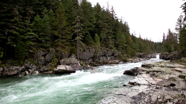 wide shot of beautiful green water rapids in river through lichen covered rocks and evergreen forest. - mcdonald creek stock-videos und b-roll-filmmaterial