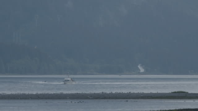 wide shot of birds roosting on a shore with a boat cruising in the background - vagare senza meta video stock e b–roll