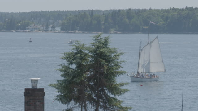 Wide shot of boats behind a pine tree in Boothbay Harbor