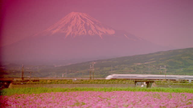 wide shot of bullet train passing field of flowers / mt fuji background / filter - mt fuji stock videos & royalty-free footage