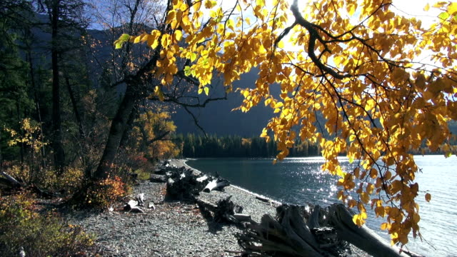 wide shot of calm mountain lake with golden leafed tree branches in foreground. - 色が変わる点の映像素材/bロール