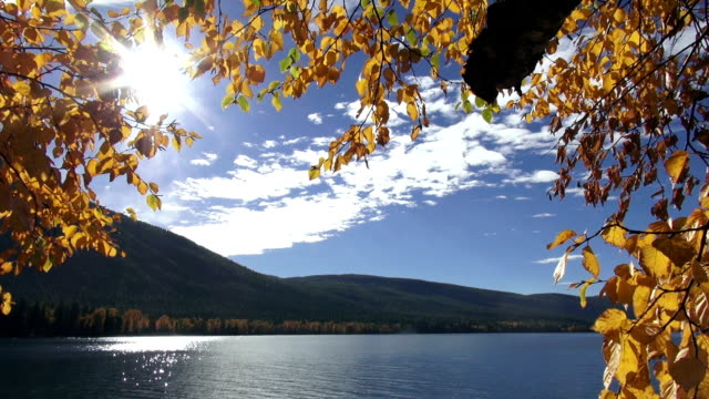 wide shot of calm mountain lake with golden leafed tree branches in foreground. - glacier national park us stock videos and b-roll footage