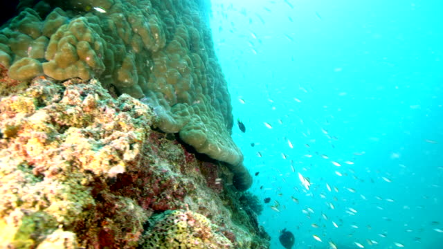 Wide shot of camera circling large reef with fish