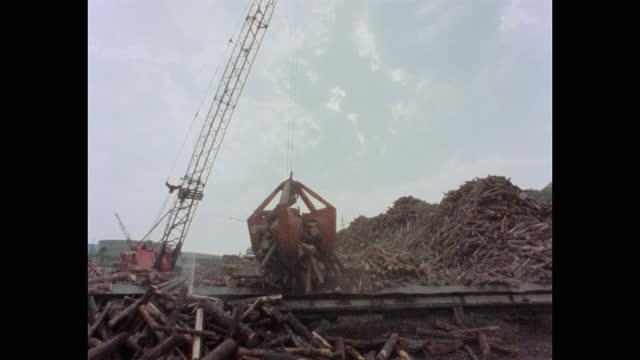 wide shot of crane unloading wooden logs on conveyor belt in lumberyard, maine, usa - forestry industry stock videos & royalty-free footage