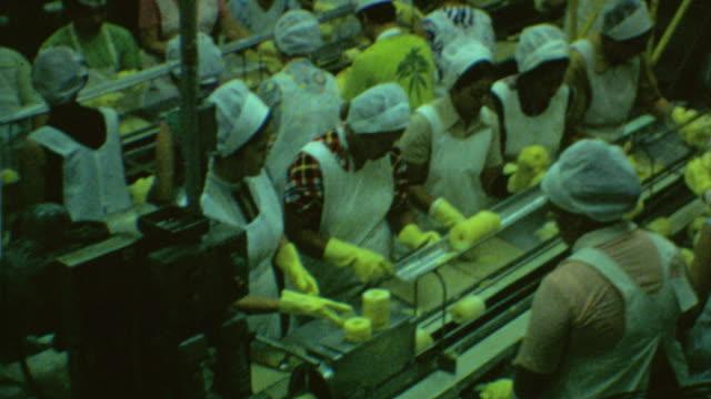 wide shot of dole pineapple factory / medium shot of women working preparing canned pineapple dole pineapple factory on august 04 1970 in wahiawa... - haarnetz stock-videos und b-roll-filmmaterial