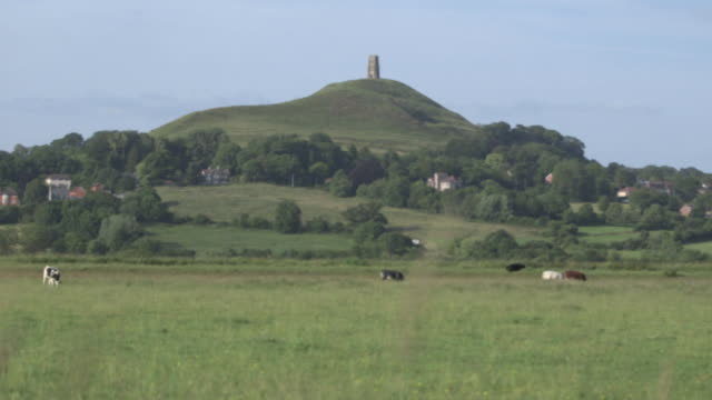 Wide shot of Glastonbury Tor seen across a field being grazed by cattle, Somerset, UK.