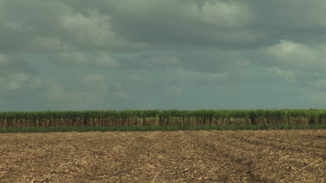 wide shot of harvested hay field under cloudy sky - hay icon stock videos & royalty-free footage
