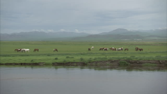 wide shot of horses grazing on banks of river - ranch icon stock videos & royalty-free footage