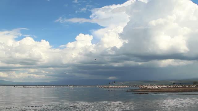 Wide shot of Lake Nakuru in Kenya.