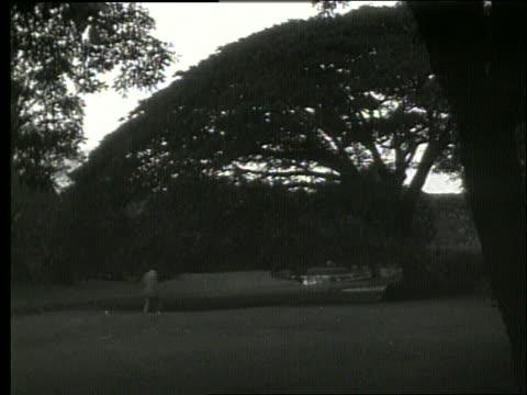 b/w wide shot of man walking toward banyan tree / hawaii / 1919 / no sound - 1910 1919 stock videos and b-roll footage