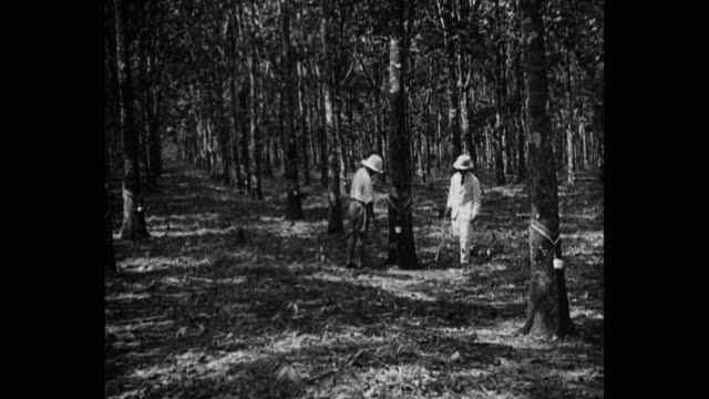99 Collecting Tree Sap Videos And Hd Footage Getty Images