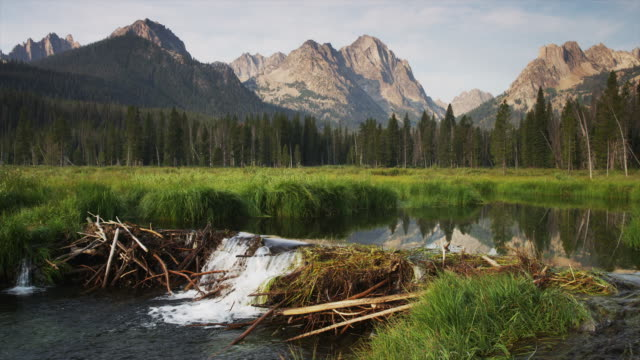 wide shot of mountains and beaver dam on lake / redfish lake, idaho, united states - beaver dam stock videos and b-roll footage