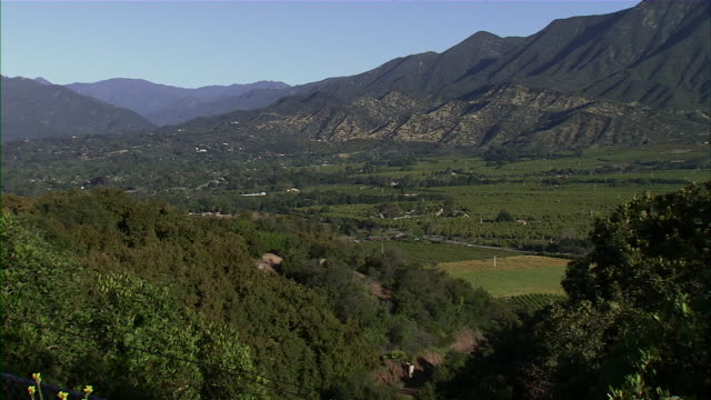 Wide shot of Ojai Valley Orchard.