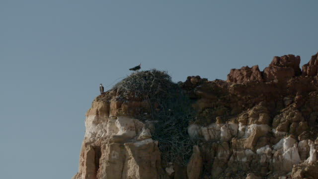 wide shot of pair of osprey adults perched on cliff and cliffside nest - osprey stock videos & royalty-free footage