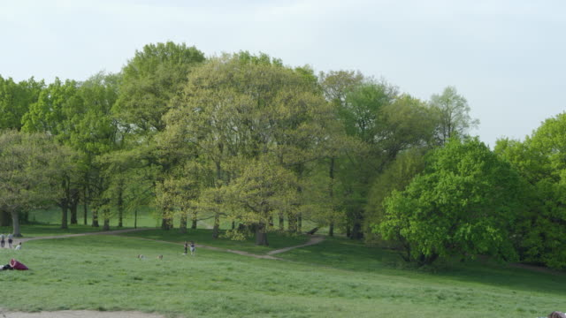 wide shot of park against clear sky, primrose hill, london, england, united kingdom. - grass family stock videos & royalty-free footage