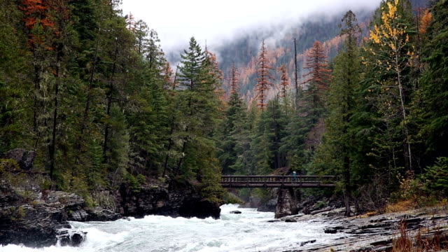 wide shot of people crossing footbridge on raging mountain river with evergreens and mist rising from mountains. - mcdonald creek stock-videos und b-roll-filmmaterial