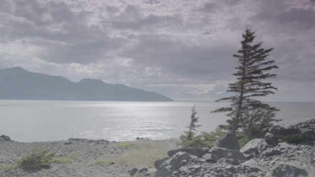 Wide shot of pine trees in front of a sea and mountains