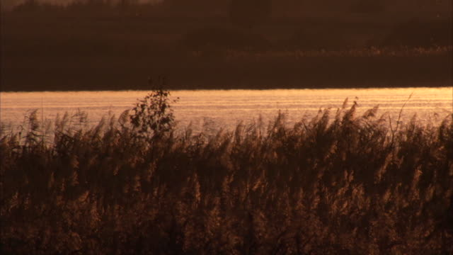 stockvideo's en b-roll-footage met wide shot of shimmering lake and reeds at sunset - monochroom