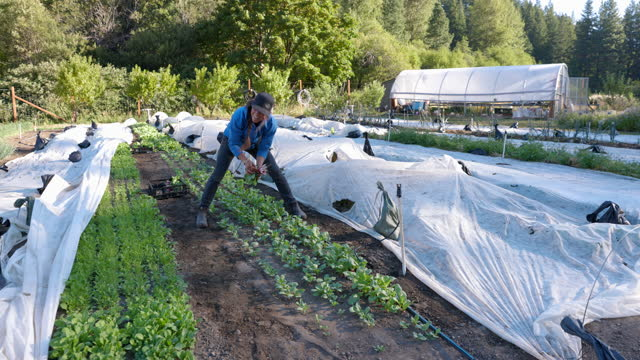 wide shot of smiling female farm owner picking organic radishes on summer morning - satisfaction stock videos & royalty-free footage