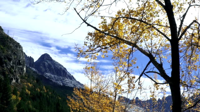 wide shot of snow covered jagged mountain peaks with yellow leafed trees blowing in the wind in foreground. - glacier national park us stock videos and b-roll footage