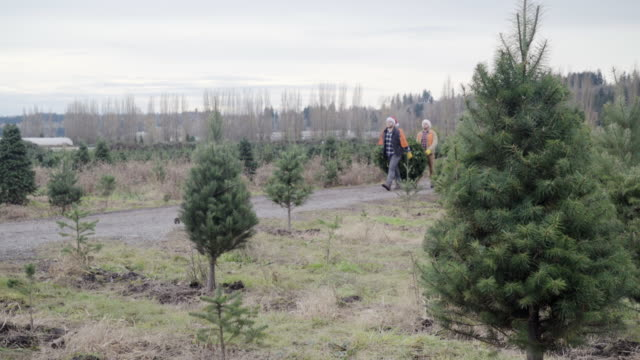 wide shot of staff carrying a tree at a pine tree farm - christmas tree stock videos and b-roll footage