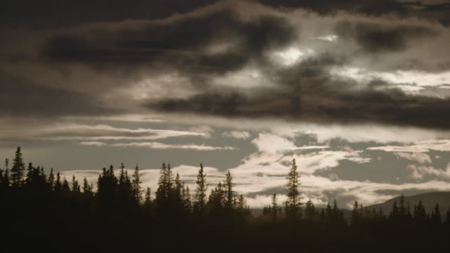wide shot of sunset over a pine forest in alaska - pinaceae stock videos & royalty-free footage