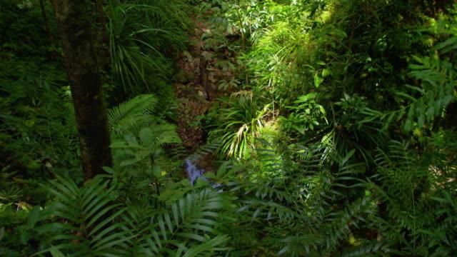 a wide shot of the jungle - saftig bildbanksvideor och videomaterial från bakom kulisserna