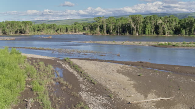 wide shot of the yellowstone river - riverbank stock videos & royalty-free footage