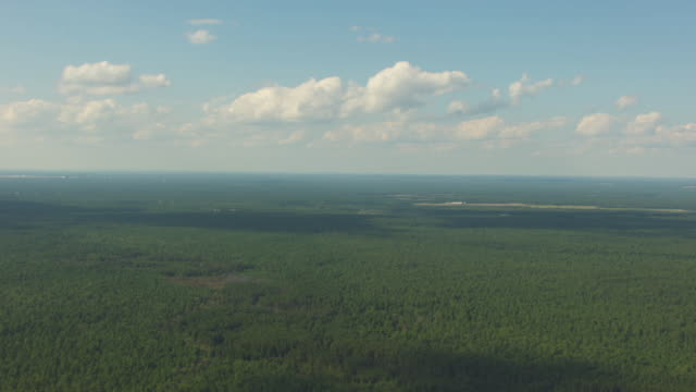 wide shot of the new jersey pine barrens - pine stock videos & royalty-free footage