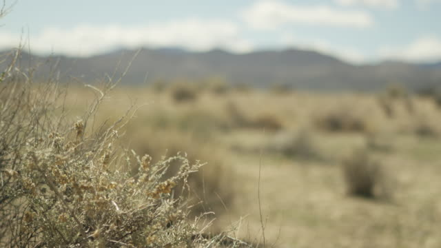 Wide shot of tumbleweeds at Nevada Test Site