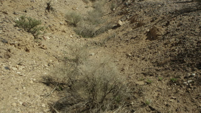 wide shot of tumbleweeds at nevada test site - nevada stock-videos und b-roll-filmmaterial
