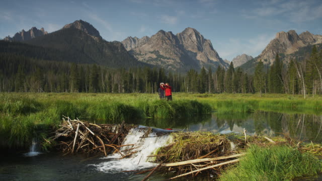 wide shot of young couple viewing beaver dam on lake with mountains in background / redfish lake, idaho, united states - beaver dam stock videos and b-roll footage